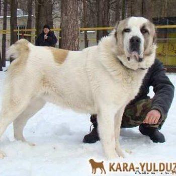 Аладжа Кара Юлдуз