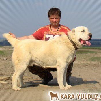 Гаплан Кара Юлдуз