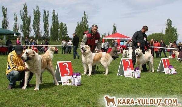 Championship in Kirovograd-2011
