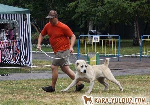 Фото наших собак в движении с выставки в Сумах