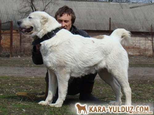 Хайша Кара Юлдуз