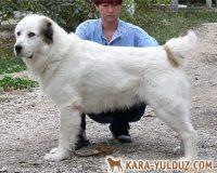 Opush Kazah-It