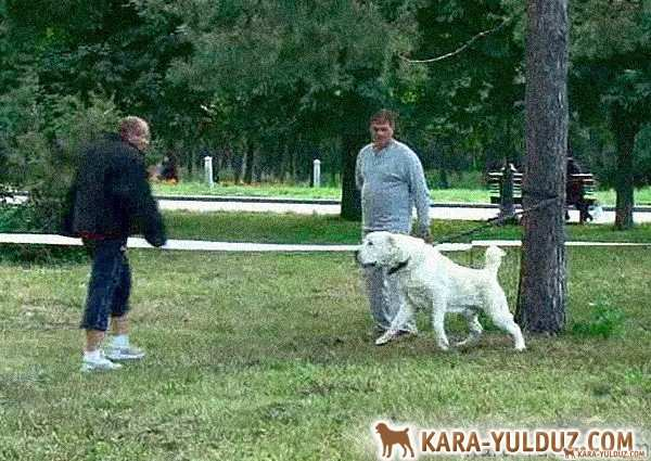 Verification of nervous system Central Asian Shepherd Dogs in Kiev 21 August 2011