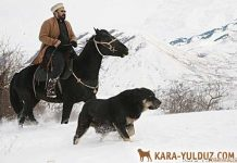 Среднеазиатская овчарка (алабай)