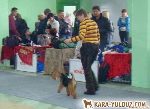 Victory in Belgorod