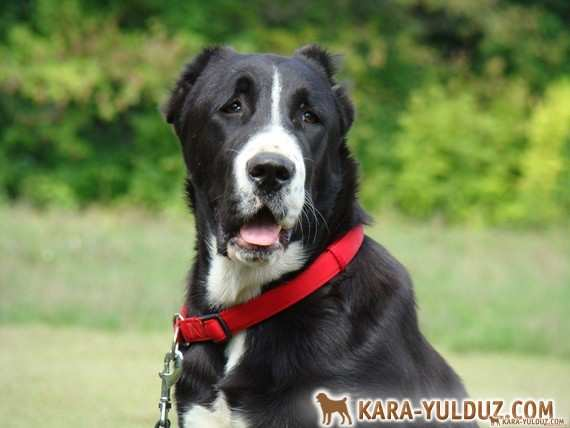 Новые фото на страничках собак