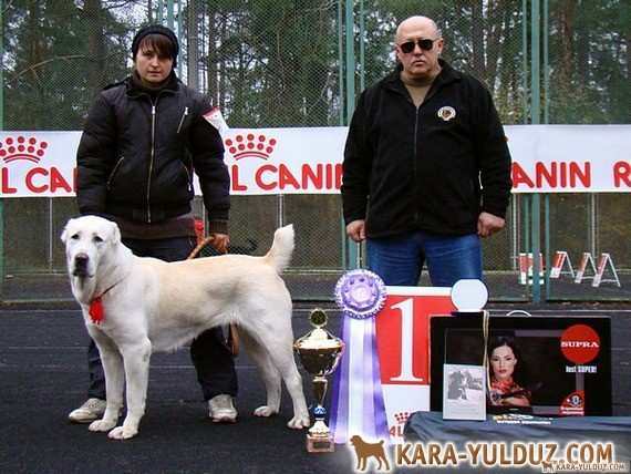 Осенняя выставка в Киеве ранга Победитель клуба
