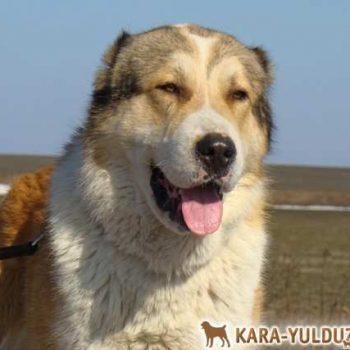Вагиз Кара Юлдуз