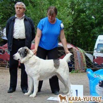 Ердамчи Кара Юлдуз