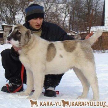 Янгал Кара Юлдуз