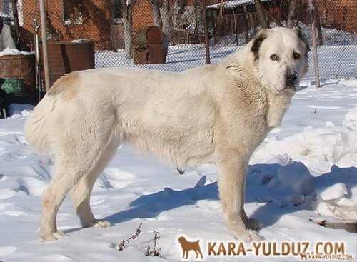Умида Кара Юлдуз