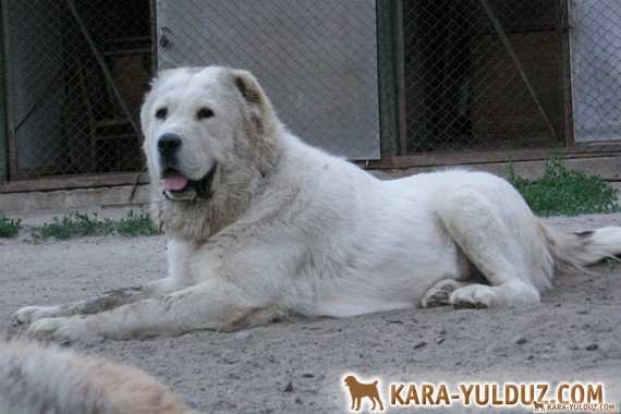 Малая Медведица Кара Юлдуз