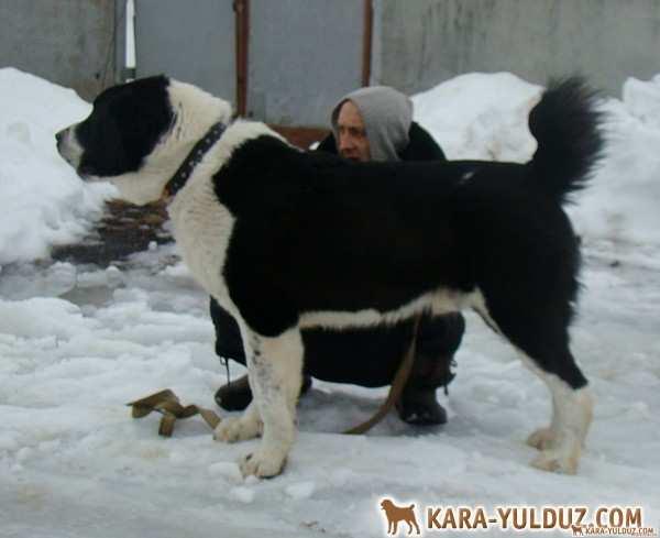 Гоюн Ити Кара Юлдуз