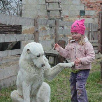 Катана Кара Юлдуз