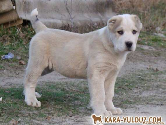 Кирида Кара Юлдуз