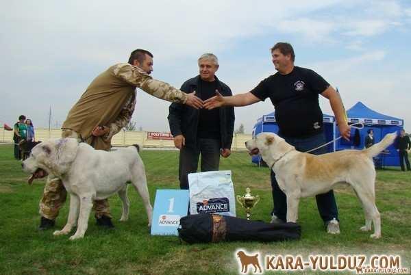 Выставка САО ранга Победитель клуба